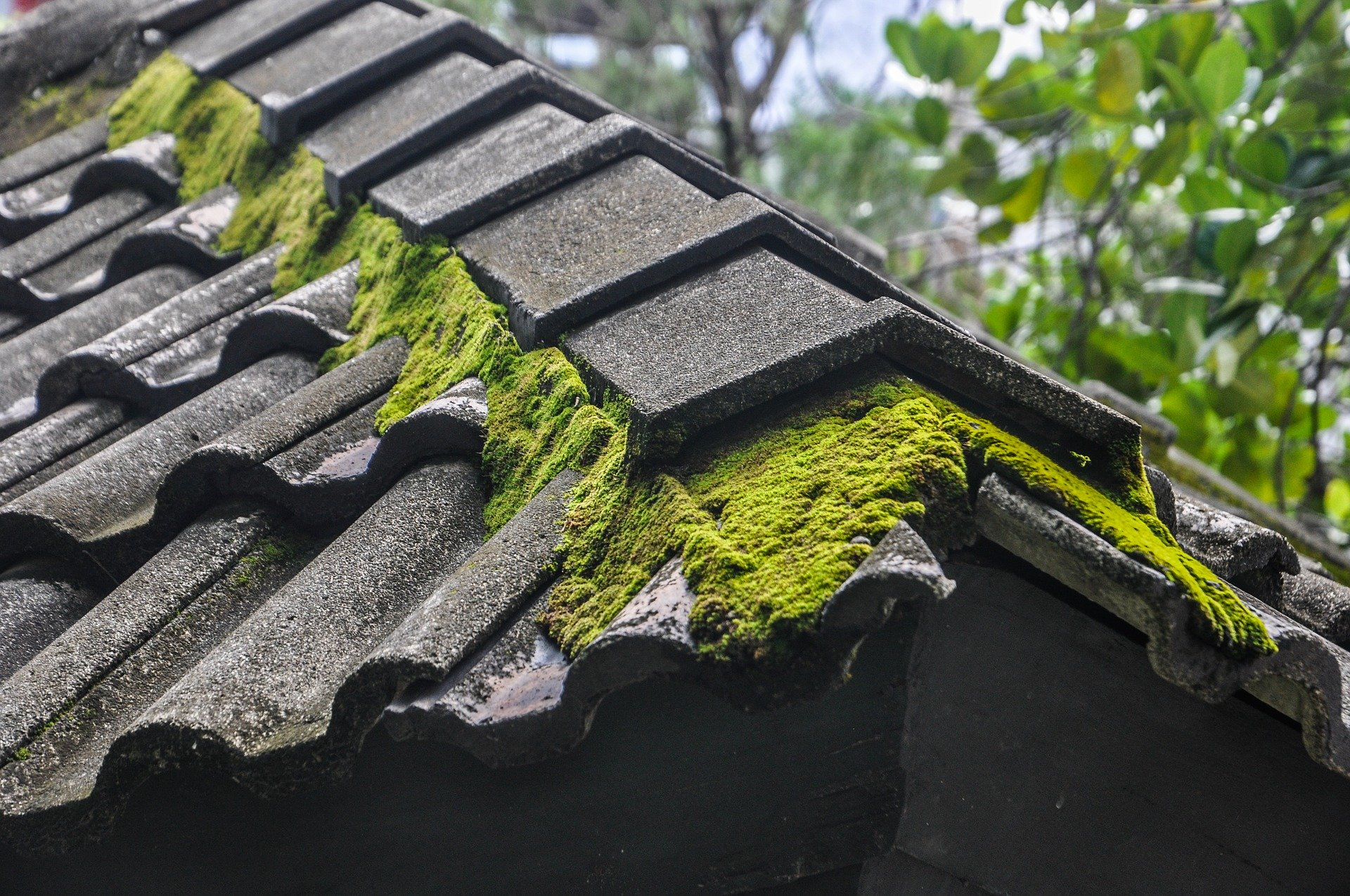 How to Prevent Water Damage from Affecting your Roof